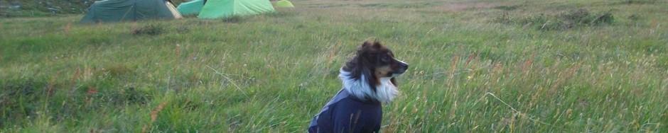 Fjällräven Classic mit Hund