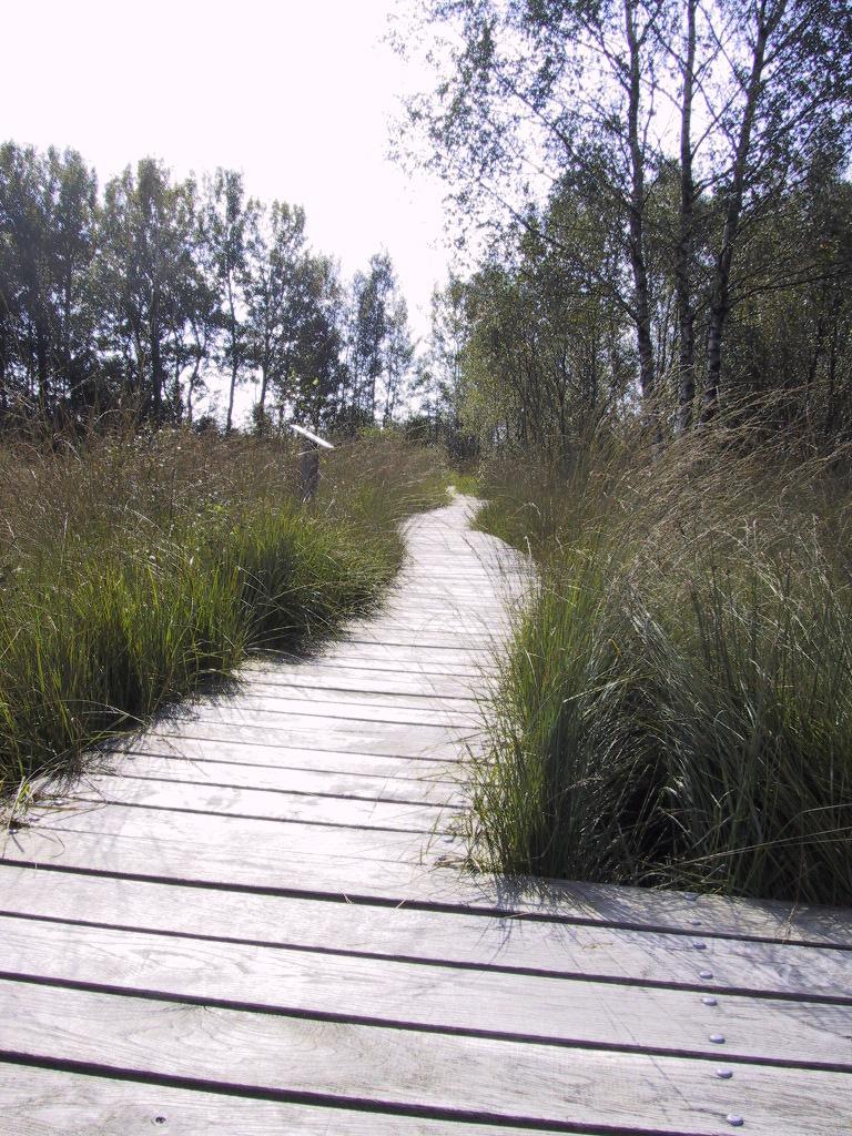 Ein Weg durch das Dosenmoor