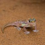 Radreisen: Tierwelt in Namibia