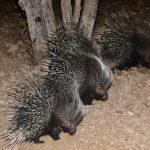 Radreisen: Begnungen mit der Tierwelt in Namibia